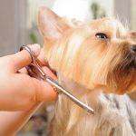 Rodzaje usług świadczonych przez psiego fryzjera