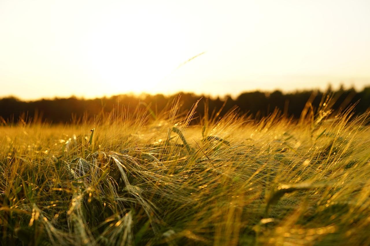 Zastosowanie herbicydów w rolnictwie